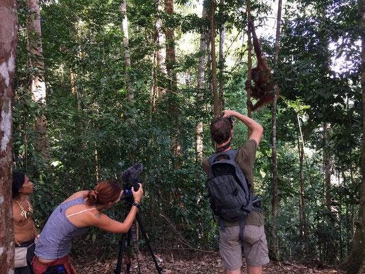 Ipul, Dieuwertje, Jasper and Sumatran Orangutan.
