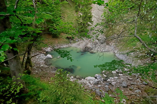 Hidden sinkhole in the woods.