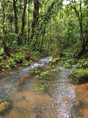 Forest stream at Yatama
