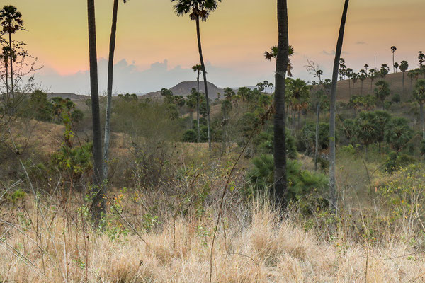 Late afternoon on Rinca. © Jasper Boldingh