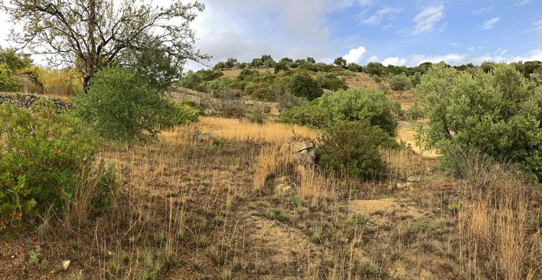 Habitat of Asp Viper, Moorish Gecko and Italian Wall Lizard.