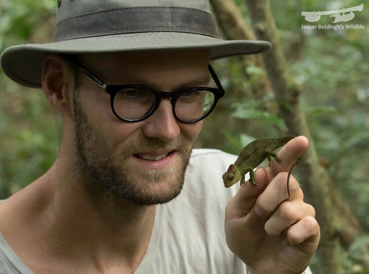 Me admiring the endemic and possibly endangered Mulanje Chameleon.