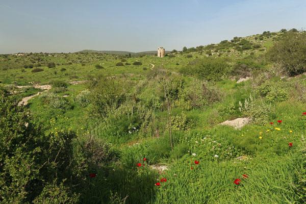 Habitat for many species.