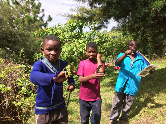 Before we left the sons of Elisha also found two more Rwenzori Three-horned Chameleons. We even made them loose their fear of the chameleons and hold them.