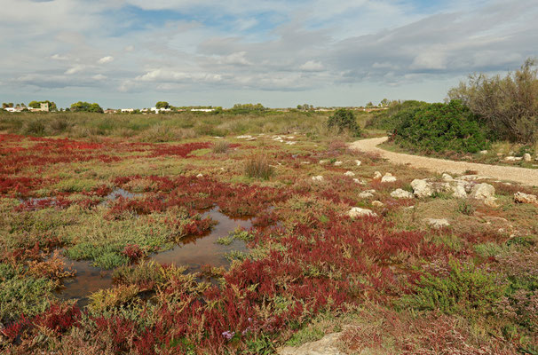 The salt marshes at Palude del Capitano.