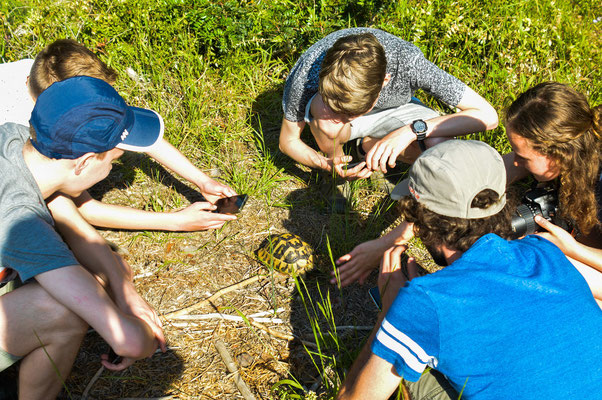 Students admiring our first Hermann's Tortoise (Testudo hermanni) © Madeleine Wouda