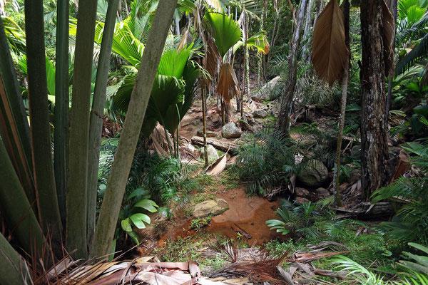 Fond Ferdinand Nature Reserve