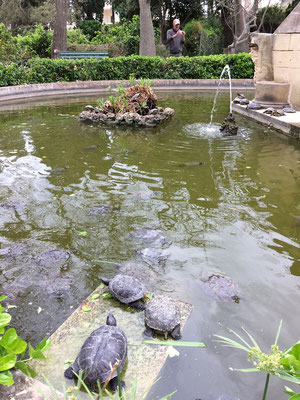 The turtle pond at San Anton Gardens.