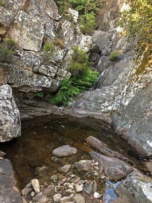 Habitat of Sardinian Brook Newt (Euproctus platycephalus)