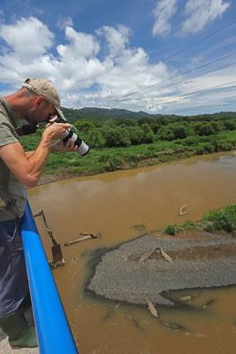 Croc photography.