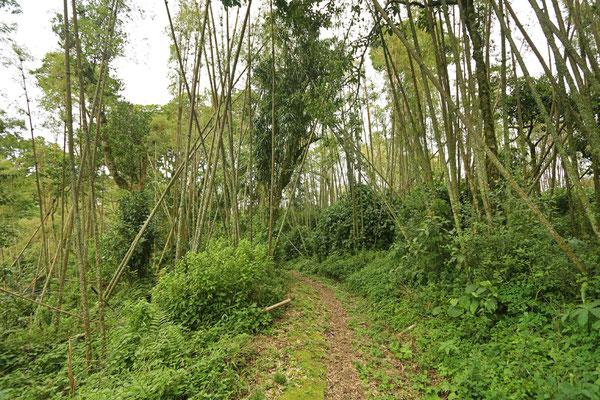 Bamboo zone