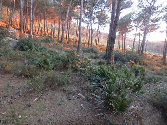 North African Fire Salamander habitat