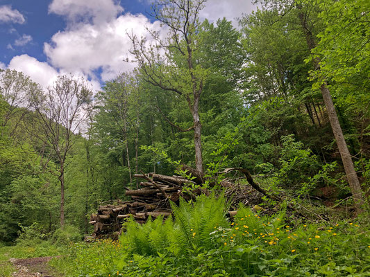 Wood piles at forest edges, perfect habitat for...