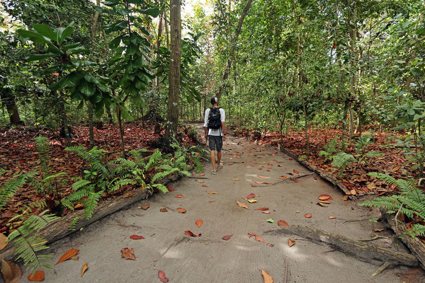 Walking through the La Vev Reserve, Indian Almond leaves abound.