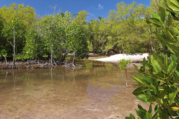 Curieuse mangroves
