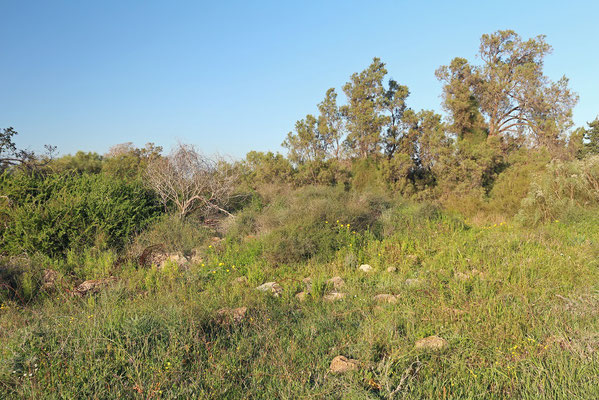 Habitat of Bridled Skink, Snake-eyed Skink, Glass Lizard, Worm Snake and Reddish Whip Snake.