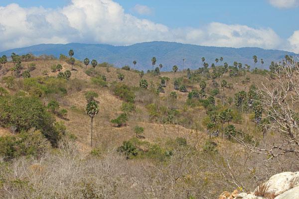 Dry savannah on Rinca.