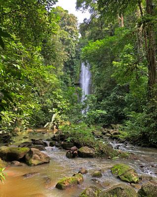 Beautiful vista through the jungle.
