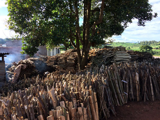 All these remaining forest patches turn into fire wood, sold along the road.