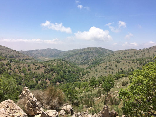 Lush green Oak forests cover the lower slopes of Mount Hermon, provifing habitat for Levant Green Lizard, Snake-eyed Lacertid, Hatay Lizard, Israeli Fan-fingered Gecko, Hermon Bowfoot Gecko, Palestine Kukri Snake and many more species.