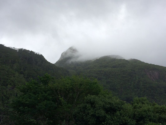 It is on mountaintops like these where the aptly named cloud forest can be found.