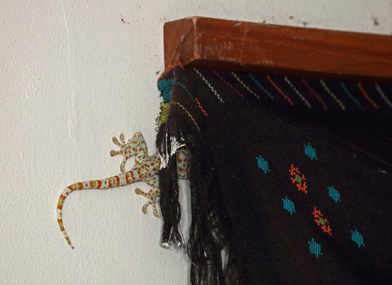 Well hidden Tokay Gecko (Gekko gecko)