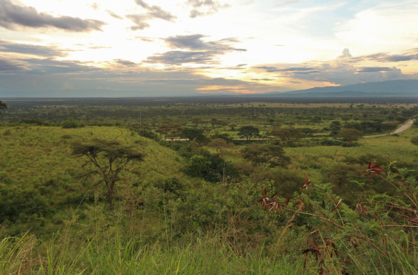 View on the plains of Queen Elizabeth National Park.