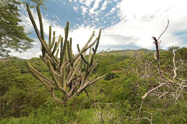 Xeric scrubland in the Motagua Valley.