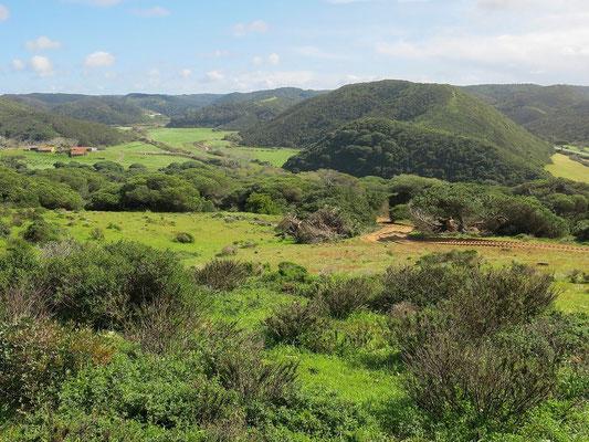 Lush green landscape. © Trevor Willis