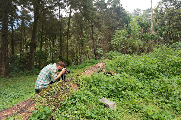 Photography session in a nice stretch of secondary forest.