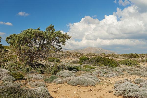 Extensive sand dunes near Diakoftis Beach.