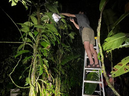 Jasper on the ladder, snapping some Splendid Leaf Frog pictures.