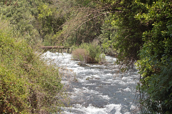 Tel Dan comprises one of the sources of the Jordan River, here the biggest one of them.