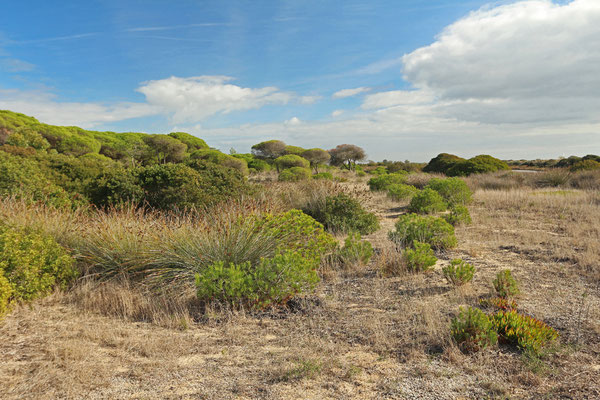 Coastal dunes at the edge of the Ria Formosa NP.
