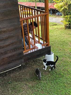 Sander making feline friends wherever he goes.