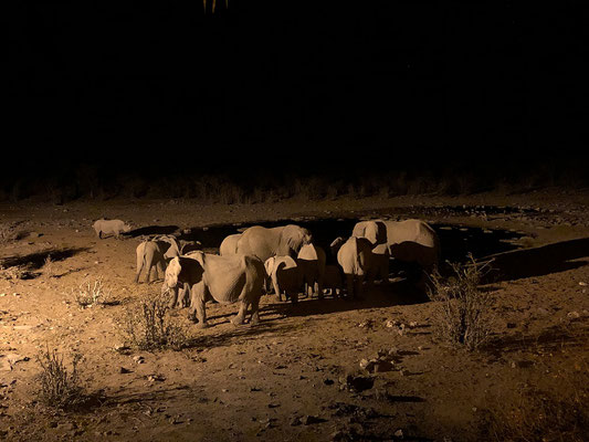 Moringa Waterhole at night with Black Rhino and Elephants.