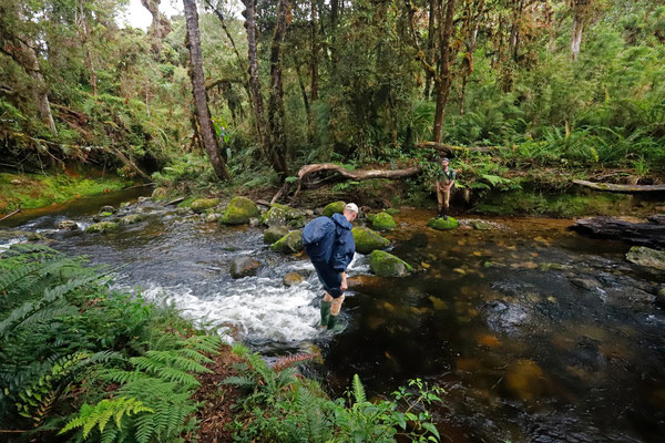 Crossing one of the many streams during our hike to La Turbera.