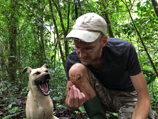 Our new friend Dingo was a little less than impressed by my gymnophthalmid find.