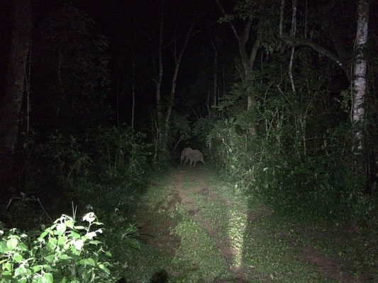 Elephant crossing the path in front of us.