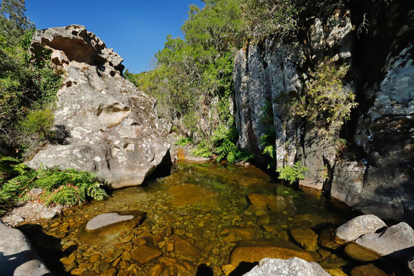 Amazing place for a swim and habitat of many species such as Marsh Frog, Tyrrhenian Painted Frog, Tyrrhenian Tree Frog, Viperine Snake, Western Whip Snake, Tyrrhenian Wall Lizard, Tyrrhenian Algyroides, Tyrrhenian Rock Lizard and Leaf-toed Gecko.