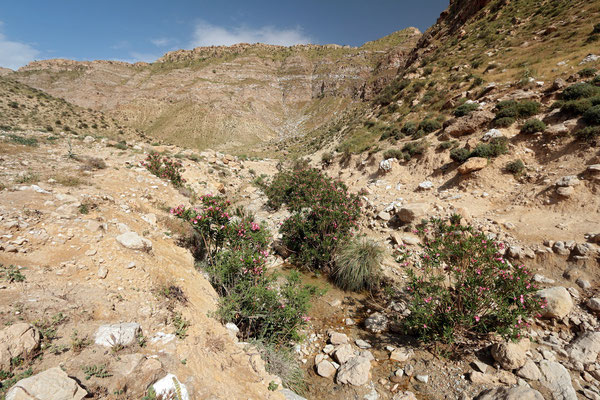 Habitat of Spider-tailed Horned Viper and Lorestan Toad. © Laura Tiemann