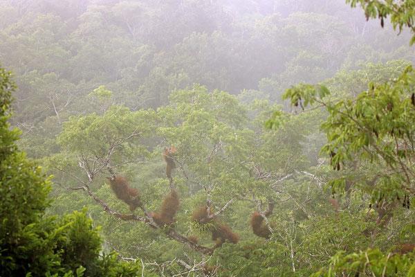 Endless sea of green underneath a veil of mist.
