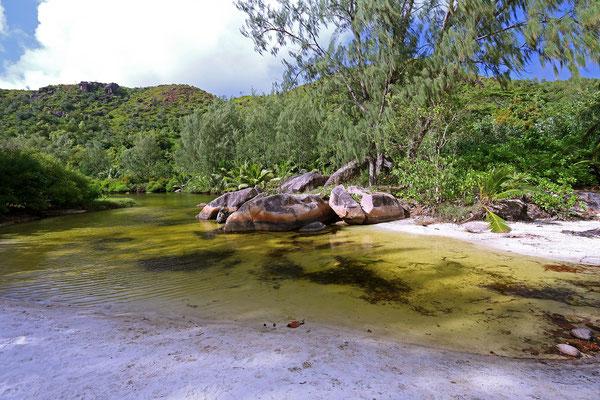 Anse Lazio wetland