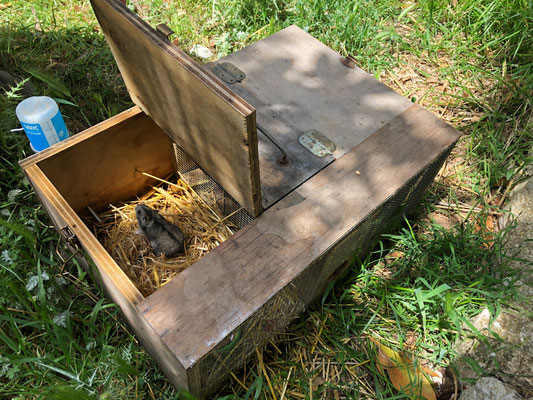 These wooden boxes contained a hamster or a mice and serve as snake traps, specifically for Ladder Snakes we have been told.