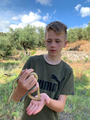 Finn admiring this strikingly coloured snake. © Trevor Willis