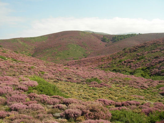 Hills coloured purple by Heather (Erica manipuliflora).