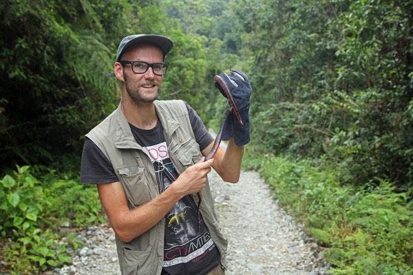 Central American Milk Snake (Lampropeltis abnorma) and I.