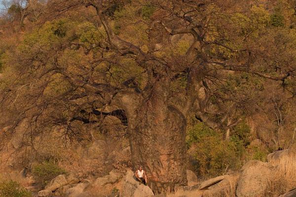 Baobobby