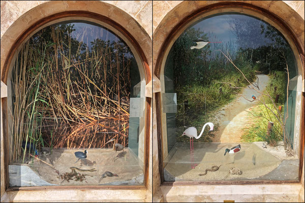 Nicely made dioramas next to the entrance of the visitor center.