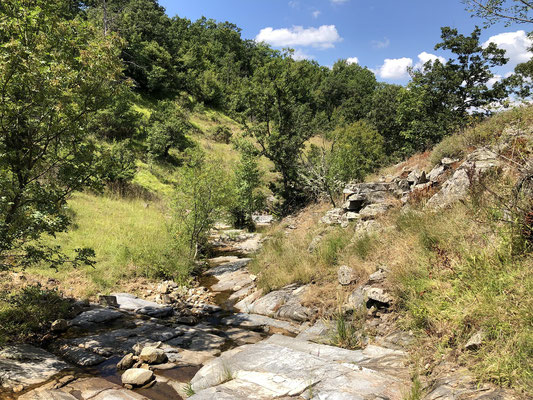 This streambed is home to a great number of species.
